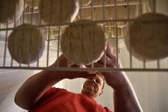 TEM - Camembert, mozzarella ou roquefort russes, ru00E9ponse  u00E0 l'embargo 1